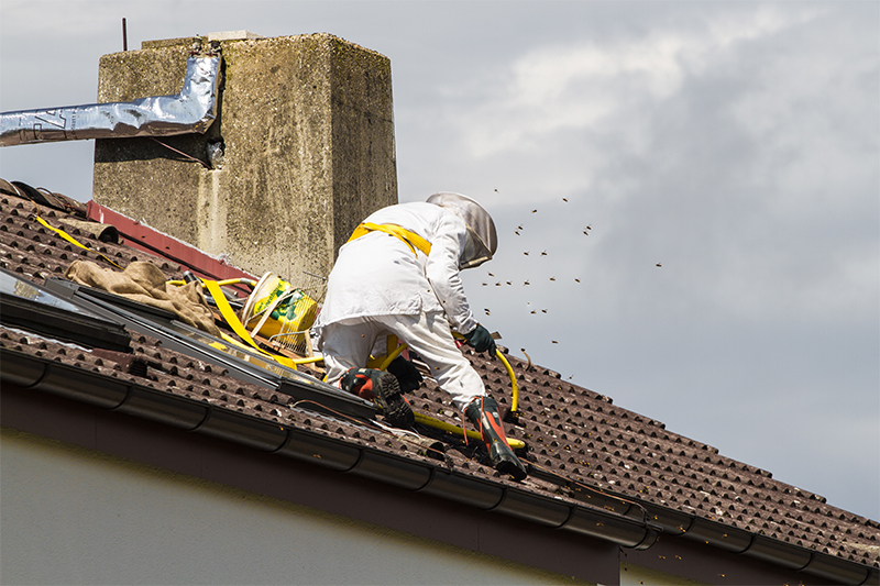 Bee Pest Control in Portsmouth Hampshire